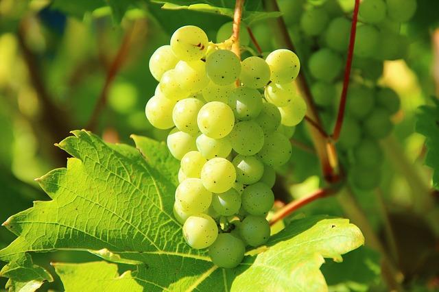 grozdje voće
