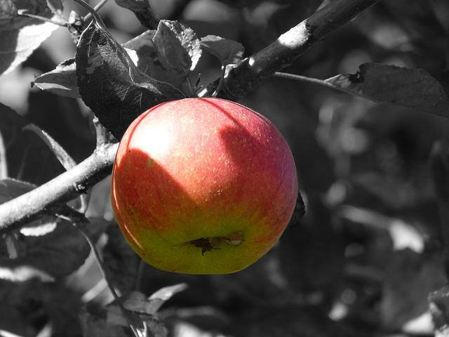 jabuka voće