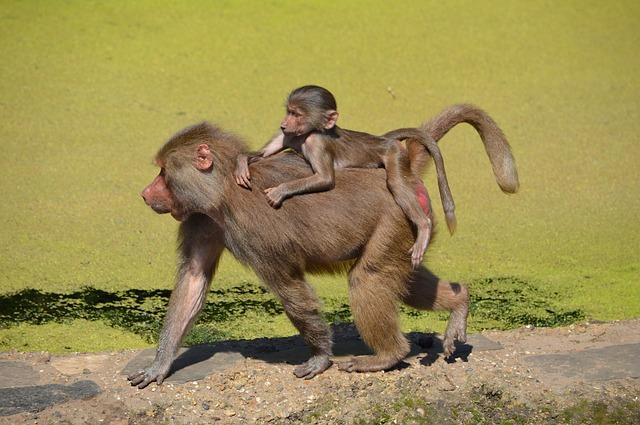 Divlje životinje - majmun