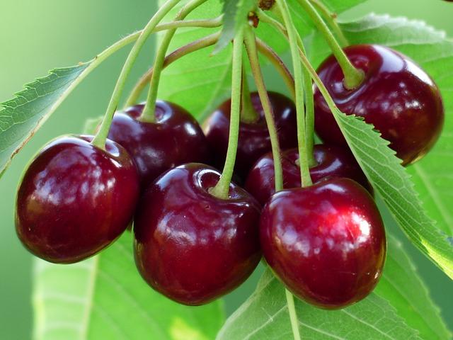 trešnja voće