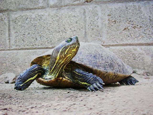 Zec i kornjača