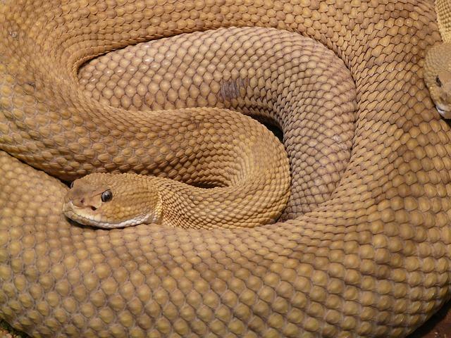 gmazovi - zmija