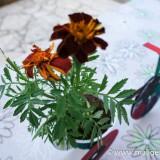 Zasadimo biljku u COOL spremniku